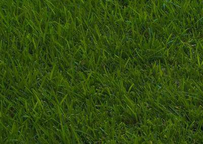 grass1200
